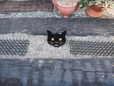 Dont_cat