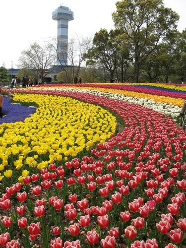 木曽三川公園チューリップフェスタ